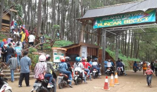 Akhir Pekan, Wisatawan Padati Hutan Pinus Puncak Becici