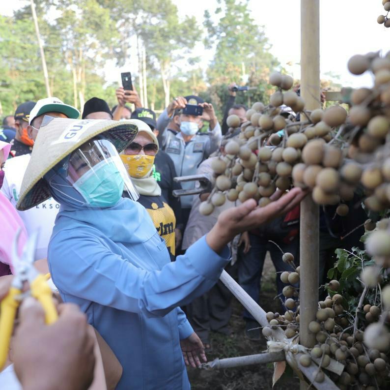 Gubernur Bangga Klengkeng Premium Lumajang, Potensi Tembus Pasar Internasional