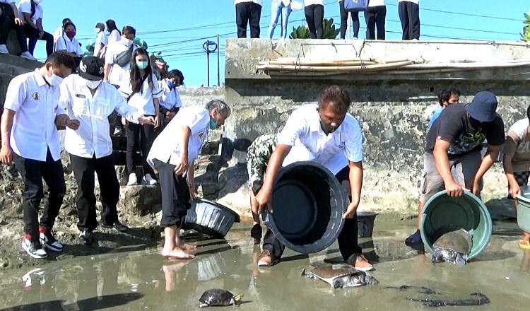 Menjadi Tradisi, Umat Tionghoa Tuban Lepas Penyu ke Laut Untuk Tolak Balak
