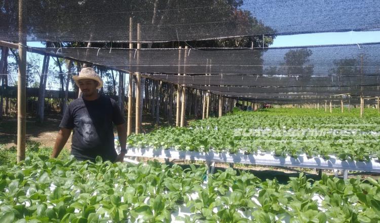 Belajar Pertanian Hidroganik dari Kang Aldi