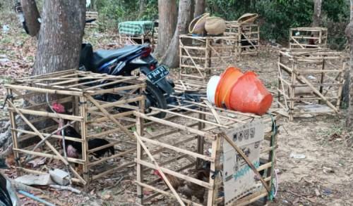 Polisi Gerebek Sindikat Judi Sabung Ayam di Pulau Kangean Sumenep
