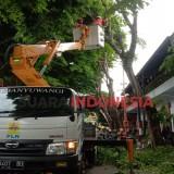 Antisipasi Cuaca Ekstrim, PLN Banyuwangi Pangkas Pohon Dekat Aliran Listrik