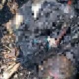 Di Jember, Ada Bayi Ditemukan Terbakar Hidup-hidup