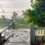 Angin Kencang Disertai Hujan Tumbangkan Pohon dan Tiang Listrik