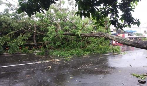 Cuaca Ekstrem, Sejumlah Pohon Tumbang Menimpa Rumah Warga