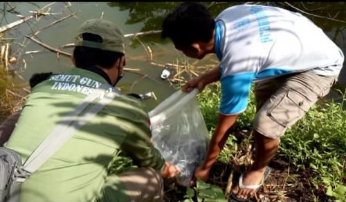 Tingkatkan Kesadaran Lingkungan, Pemuda di Banyuwangi Tanam Pohon dan Tebar Ratusan Benih Ikan