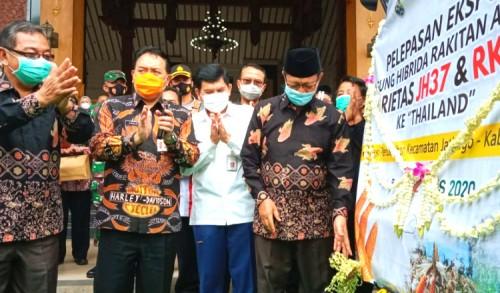 Membanggakan, Tuban Berhasil Ekspor Bibit Jagung ke Thailand