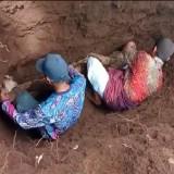 Dikubur Puluhan Tahun, Jazad Seorang Kakek di Banyuwangi Masih Utuh
