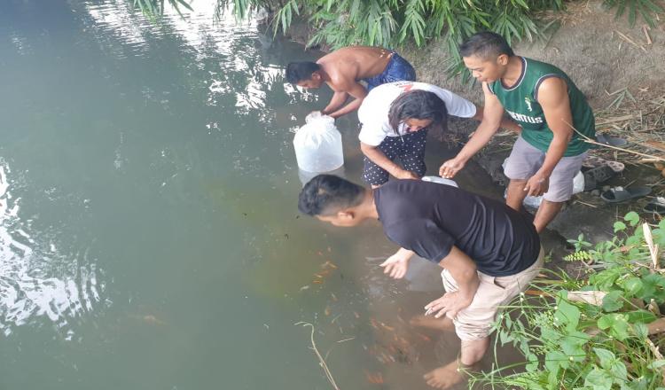 Anggota DPRD Banyuwangi, Anom Basori Tebar Ribuan Benih Ikan Koi di Desa Tembokrejo