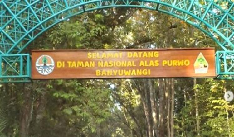 Sempat Tutup, Wisata Taman Nasional Alas Purwo Banyuwangi Kembali Dibuka