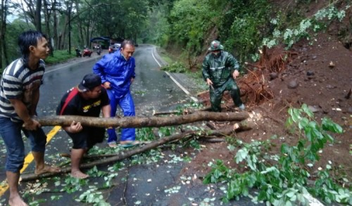 Pohon Tumbang Tutup Jalan, Babinsa Trenggalek Langsung Bertindak