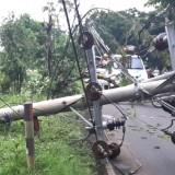 Pohon Tumbang Timpa Jaringan Listrik di Banyuwangi, Dua Kecamatan Mati Lampu