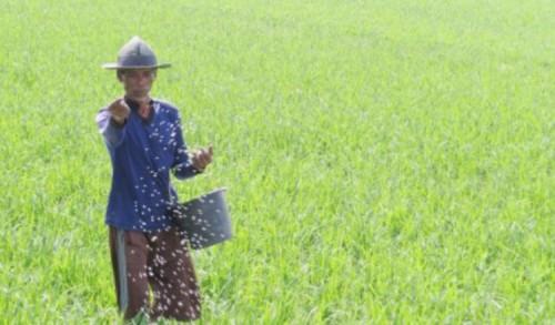 Pemkab Banyuwangi Berikan Pupuk Organik Secara Gratis pada Petani