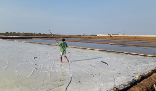 Anjlok di Tahun 2020, Target Produksi Garam Probolinggo Tahun Ini Tak Berkurang