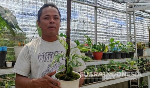 Kisah Pria Asal Kota Batu, Berhasil Bisnis Tanaman Hias di Masa Pandemi