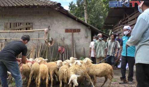 Program Ternak Desa, Nurul Hayat Serahkan 100 Ekor Domba