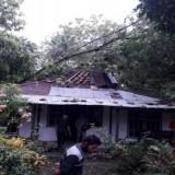 Hujan Deras di Purworejo, Pohon Tumbang Timpa Belasan Rumah Warga