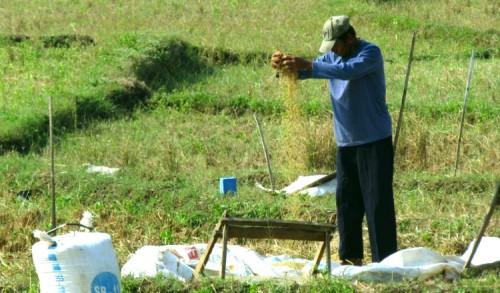 Harga Gabah di Tuban Anjlok, SPI Sayangkan Kebijakan Pemerintah Impor Beras