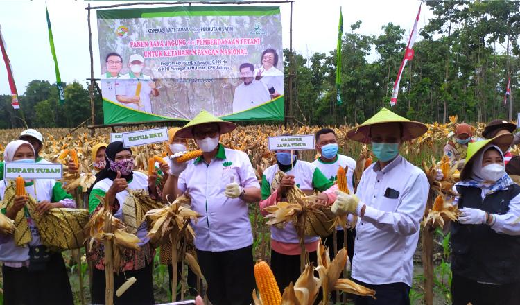 Perhutani dan HKTI Sukses Hasilkan Panen Jagung di Kawasan Hutan Tuban