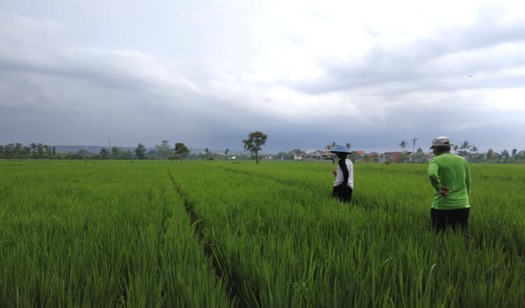 GMKI: Kebijakan Mendag Impor Beras Lukai Petani