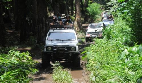 Pecinta Offroad Akui Trek Hutan Pinus Songgon Banyuwangi Menantang Adrenalin