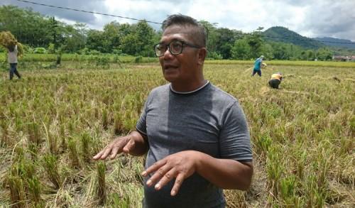Tolak Impor Beras, Nurhadi : Giat Jaga Ketahanan Pangan Petani Malah Dilukai