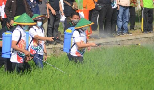NPK Kebomas Terbukti Berkualitas, Bukti Petrokimia Solusi Agroindustri