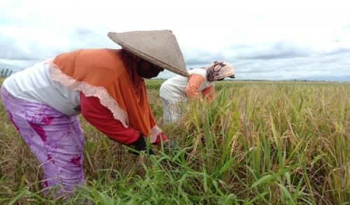 Asosiasi Distributor Pupuk Indonesia Jatim Beberkan Alasan Kenapa Petani Kesulitan Pupuk Subsidi