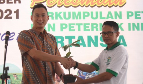 Fasilitasi Petani, Pertansia Jember Launching KUR-BNI Budidaya Tanaman Porang