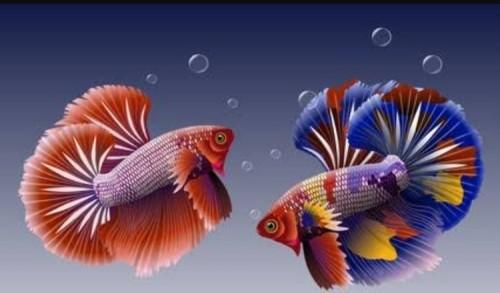 5 Jenis Ikan Hias yang Mudah Dipelihara di Rumah