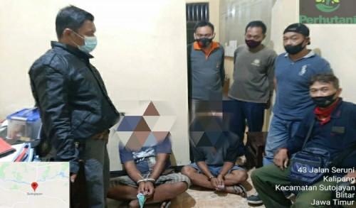 Dua Warga Kademangan Blitar Ditangkap Polisi Usai Curi Kayu di Hutan Lindung