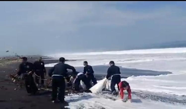 Peduli Lingkungan, Pendekar PSHT Jember Bersihkan Sampah di Pantai Paseban