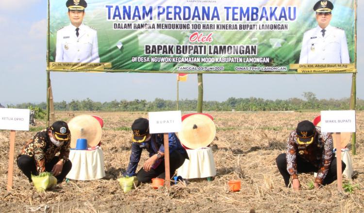 Tembakau Lamongan Berkualitas dan Bersaing di Jawa Timur, Ini Dua Varian Andalannya