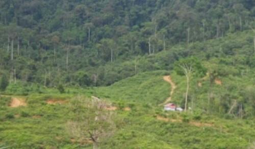 Kawasan Hutan Produksi dan Terbatas di Mukomuko Dikabarkan Akan Jadi Lokasi Tambang Batubara