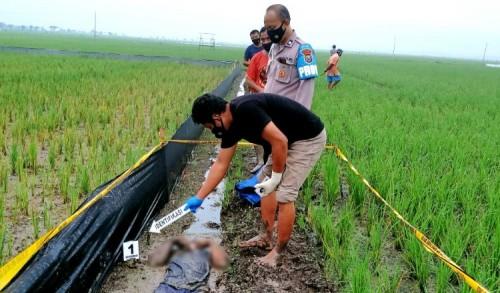 Pria di Rengel Tuban Tewas Tergeletak Tersengat Listrik Jebakan Tikus di Pematang Sawah