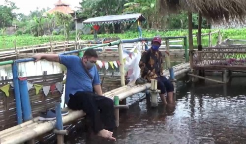 Terapi Ikan di Masa Pandemi, Relaksasi yang Bisa Tingkatkan Imun