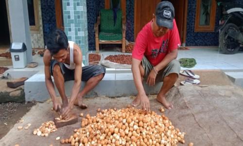 Pengusaha Pinang Asal Bondowoso Mampu Bertahan di Tengah Lesunya Ekonomi