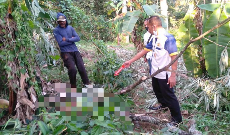 Jatuh dari Pohon Petai, Laki-Laki di Ponorogo Meninggal Dunia