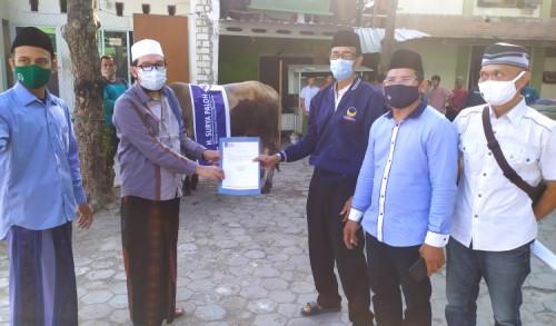 Istiqomah, Partai NasDem Kembali Salurkan Dua Sapi Kurban ke Ponpes Langitan