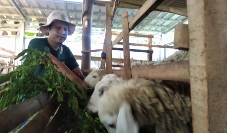 Bripka Hefry, 'Polisi Domba' di Hutan Argopuro Bondowoso