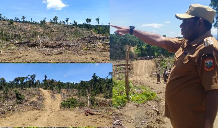 Bupati Keerom Ingatkan Pemodal Dibalik Rusaknya Ratusan Hektar Hutan di Kampung Bate