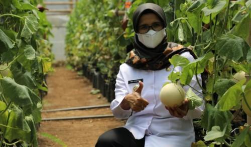 Kualitas Buah Melon Asal Kabupaten Blitar Sangat Bagus, Bupati Janjikan Bakal Terus Promosikan