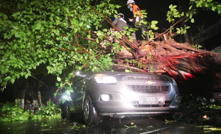 Pohon Besar Tumbang di Jombang,Timpa Mobil  Hingga Rusak Parah
