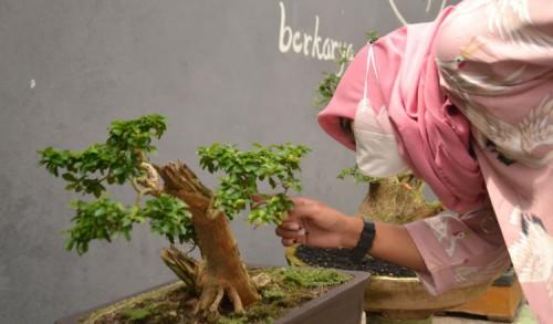 Kampung Wisata Bonsai di Jember Siap Sihir Wisatawan