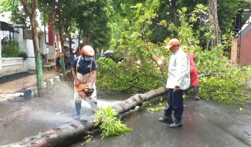 Hujan Disertai Angin, Pohon di Jalan Brawijaya Tuban Tumbang