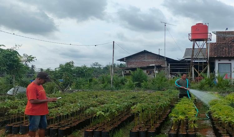 Menengok Wisata Bibit Desa Rejowinangun Purworejo di Tengah Pandemi Covid-19