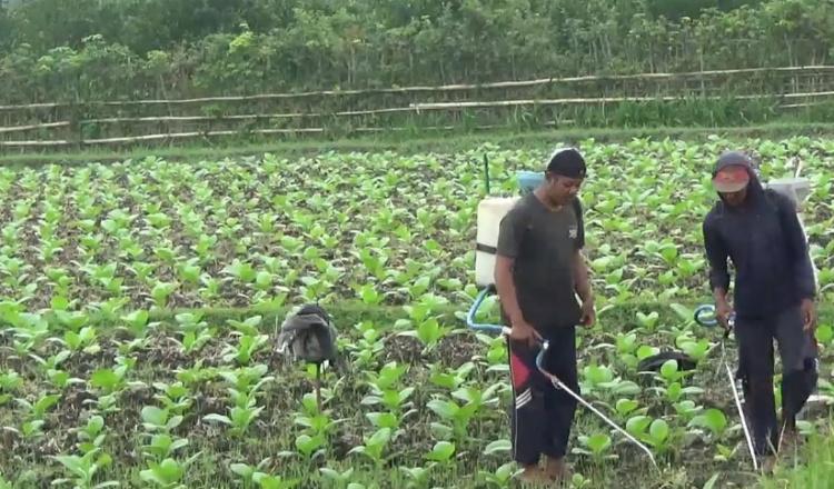 HARTANAS 2021, HKTI Jember: Saatnya Petani Berdaya