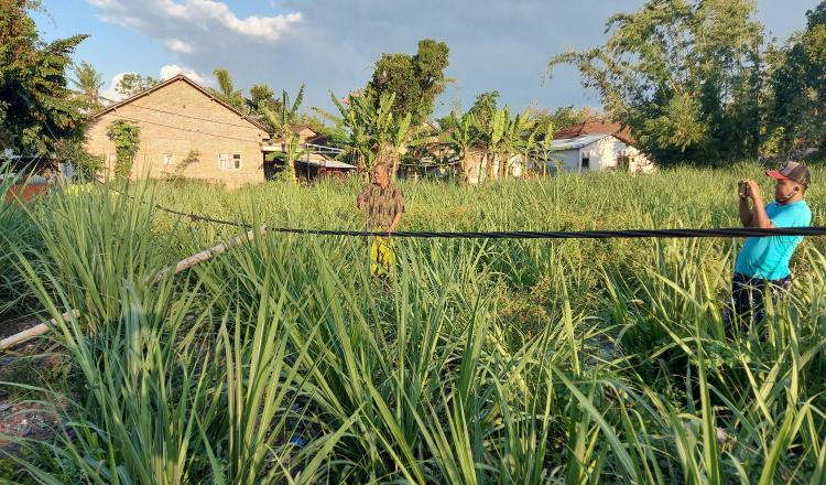 Masyarakat Resah, Kabel Sentral Listrik JTR  di Wonosari Bondowoso Nyaris Sentuh Tanah
