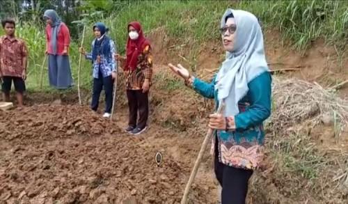 Tingkatkan Indek Pertanaman, Dinas Pertanian Purworejo Dampingi Petani Tanam Kacang Tanah