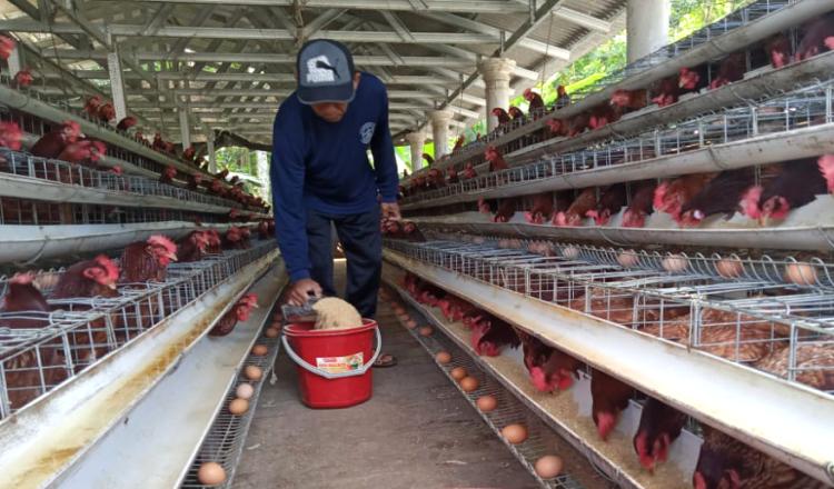 Harga Telur di Banyuwangi Anjlok, Diskopumdag Sebut Banyak Pasokan dari Luar daerah